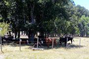 Sustentabilidad ambiental y resiliencia de la ganadería en campo natural